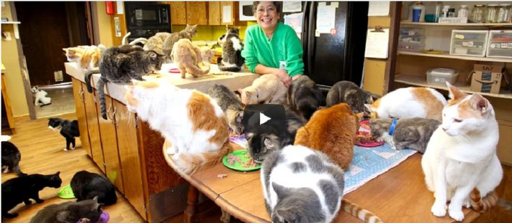 WOMAN WHO CLAIMS TO LIVE WITH 1,000 CATS STUNS EVERYONE WHEN SHE LETS CAMERA INSIDE