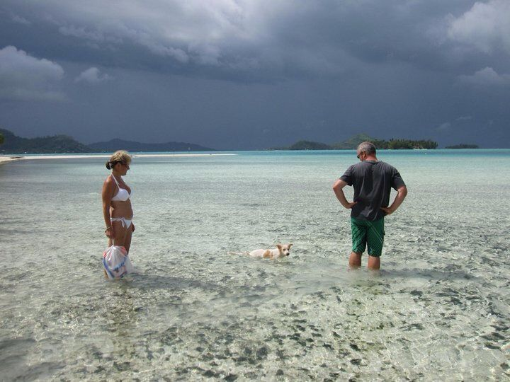 My new friend Pearl the dog trying to follow me home :( Bora Bora
