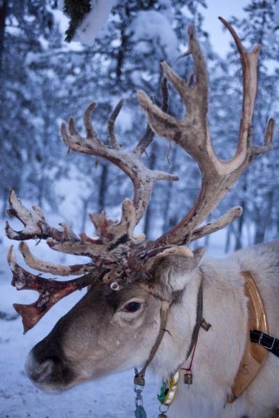 Are you Rudolph, Dasher, Dancer, Prancer, Vixen, Comet, Cupid, Donder or Blitzen?