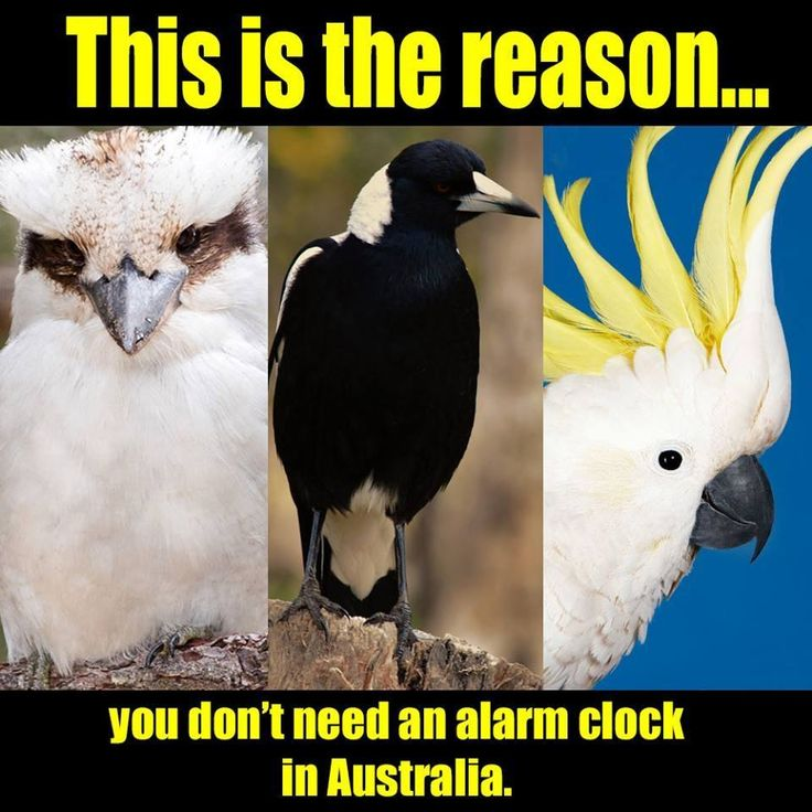 Don't forget them crows now!
