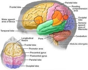 Home Remedies For Migraine Headache - Natural Treatments, Cure For Migraine Headache | Search Home Remedy