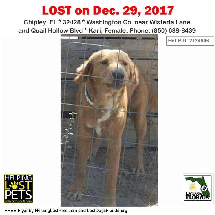 Have you seen this lost dog?  #LOSTDOG #Kari #Chipley (Wisteria Lane & Quail Hollow Blvd) #FL 32428 #Washington Co.  #Dog 12-29-2017! Female #Mix / Golden Retriever Mix Orange/Kari looks like a thinnerdeep orange gold Golden Retriever but is actually a mix and her fur texture is more like that of a Brittany Spaniel. She has darker skin around her eyelids as if she were wearing eyeliner   Phone: (850) 638-8439  More Info Photos and to Contact: http://ift.tt/2EPRZax  To see this pets location…