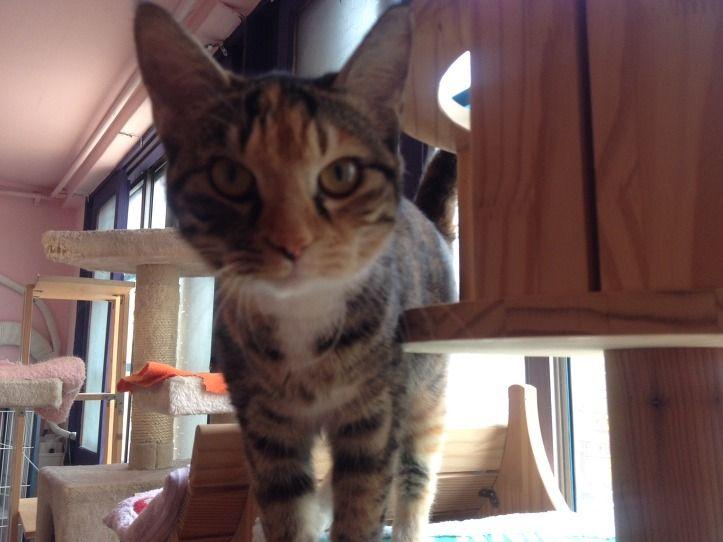 [유기묘]고양이 사랑이 입양해 주세요.