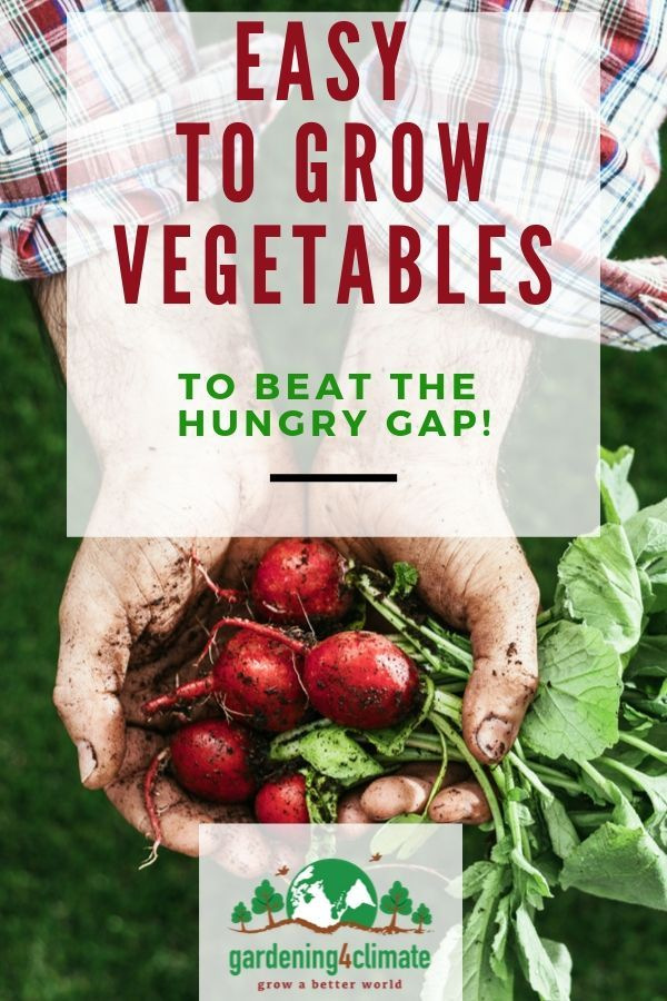 7 Fast Easy To Grow Vegetables To Plant In The Spring Garden