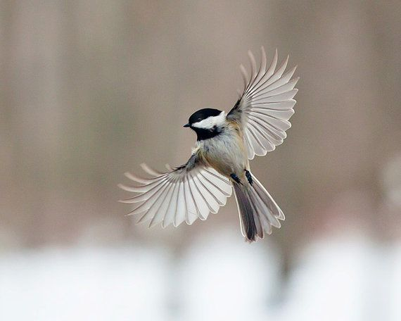 » Photos: To Have Faith Is To Have Wings : Amazing Flying Birds Photos