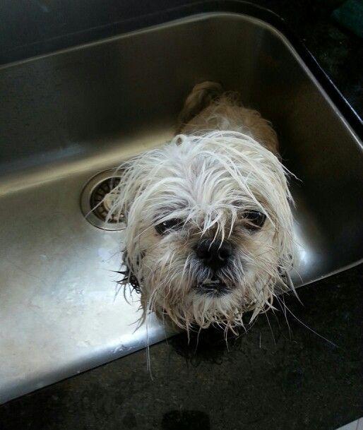 Wet puppy. Lol.