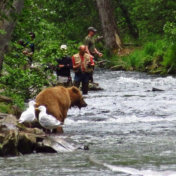 60 best gwin 39 s lodge kenai peninsula alaska images on for Russian river fishing