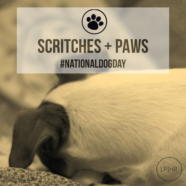 We've got nothing but Love + Paws Today // How are you celebrating with yours?  #NationalDogDay #Aug 26