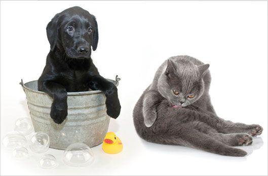 Hygiène au naturel du chien et du chat