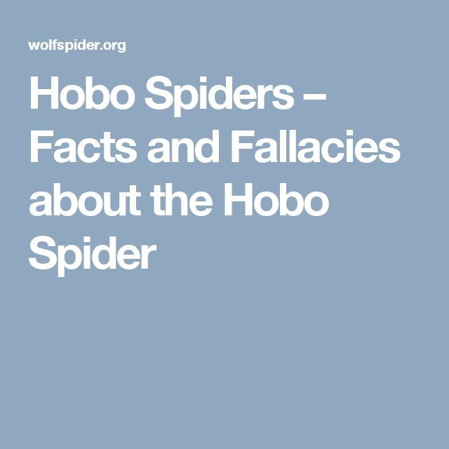 Hobo Spiders – Facts and Fallacies about the Hobo Spider