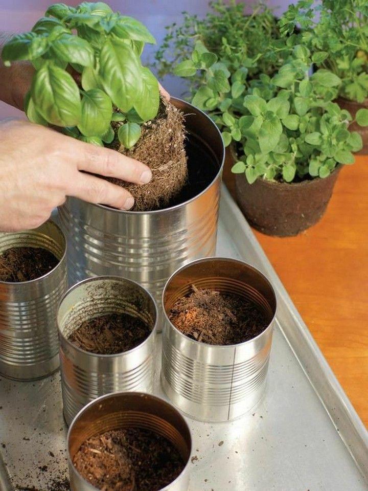 How To Grow Indoor Herb Garden For Your Home In 2020 Herb Garden