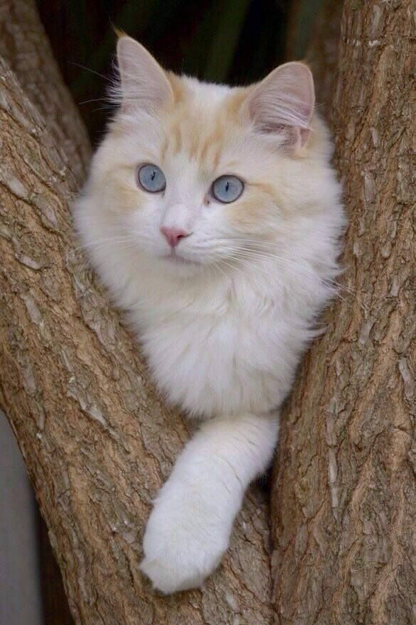 gorgeous kitty