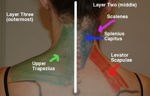 Layers 2 and 3 of the neck muscles