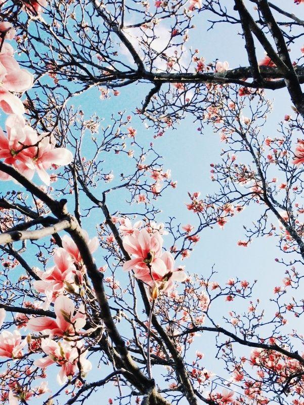 Magnolias | Emilie Ristevski | VSCO Grid