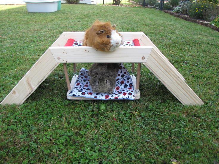 Die besten meerschweinchen spielzeug ideen auf
