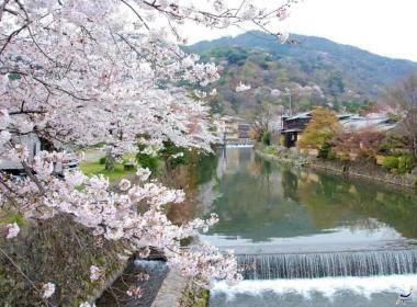 Cerisiers en fleur : quand partir ? | Vivre le Japon.com
