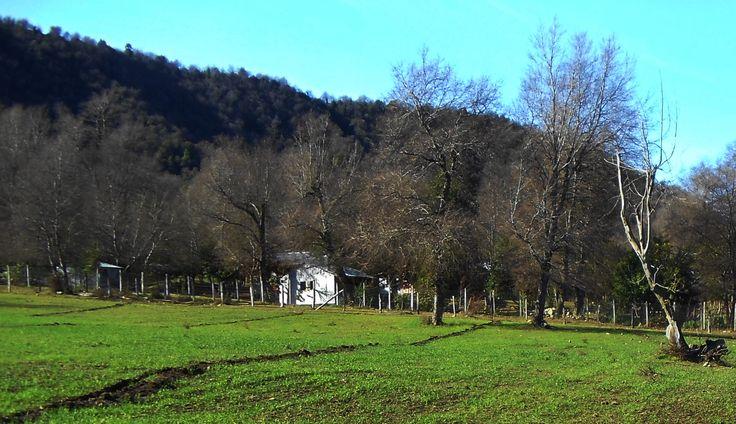 Alameda de Roble Chileno. San Fabian de Alico, Octaba Región.