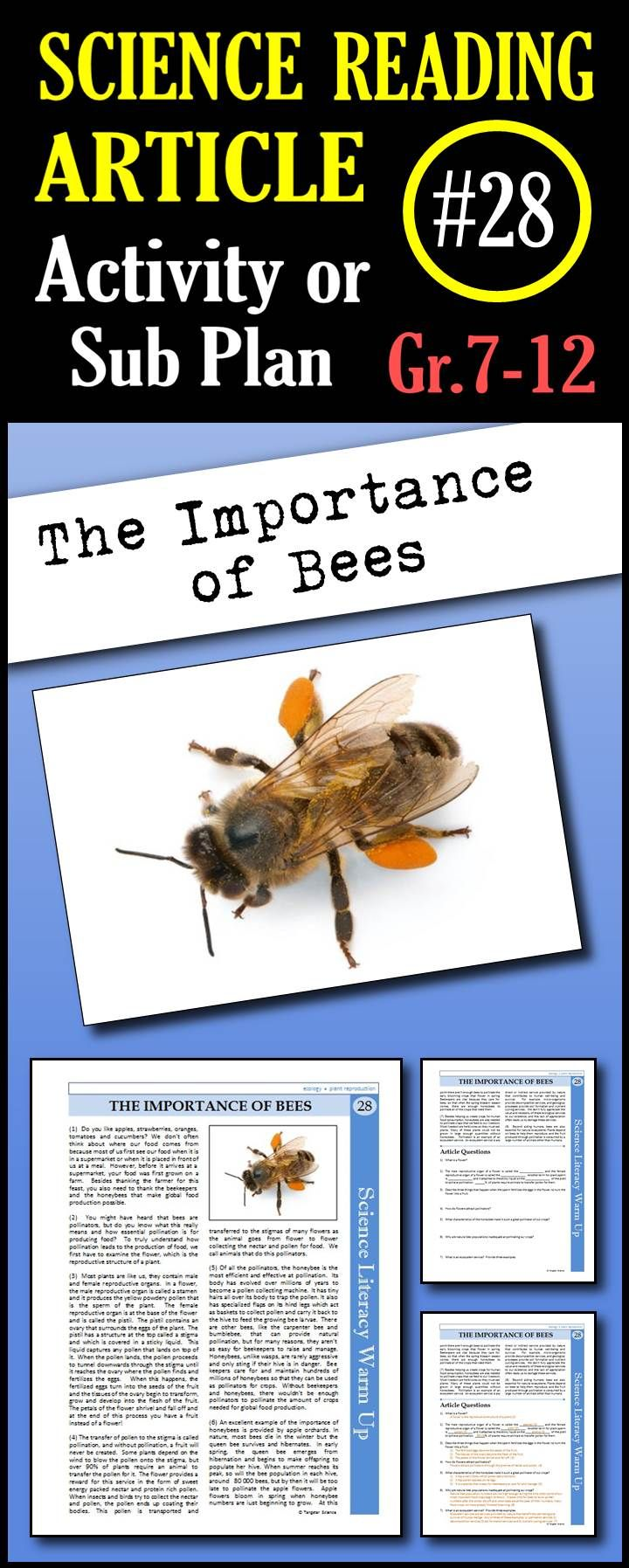 In this article, students will learn how pollination occurs, how the honeybee is specialized to collect pollen, why the honeybee is used by beekeepers over other pollinators and how critical bees are for global food production.  This is a great in class activity, homework assignment, weekly science reading assignment, sub plan or in school suspension plan. Use this to save time looking for engaging and appropriate articles with questions!