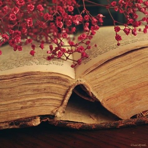 midnighflower:    Beauty and wisdom..: Words Of Wisdom, Books Pages, Vintage Books, Warm Colors, Antiques Books, Beautiful, Red Flowers, Open Books, Old Books