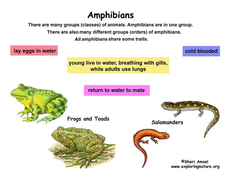 101 best Reptiles/Amphibians for Kids images on Pinterest ...