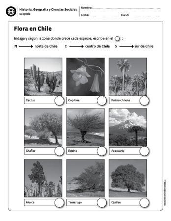 Flora en Chile