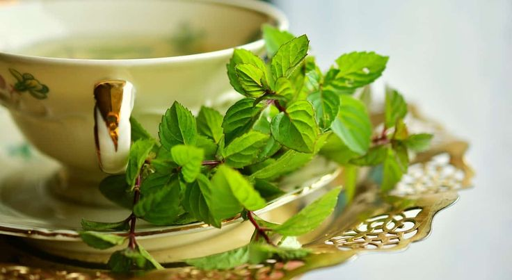 Mint leaves Mint is a prevalent herb that can use in many dishes and remedies. The herbal leaves has one of the highestantioxidantcapacities of any food. The mint oil is frequently utilized as a part of toothpaste, gum, treat, and excellence items. Possible health benefits  boost d...