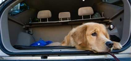 How to Curb Car Sickness in Puppies and Dogs