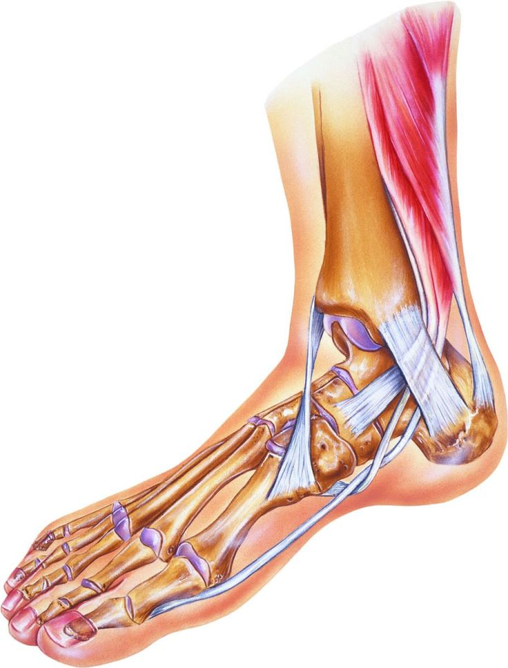 It takes less force to sprain an ankle as we age, but there are steps you can take to prevent sprains and minimize their effects when you have them. It's important to get medical attention if symptoms don't improve after a few days.