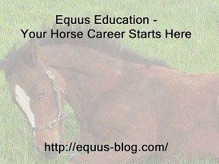 The Ultimate Equine Image Site as a Horse Business and Passive Income Source