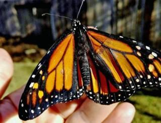 I mounted a butterflys damaged wing to recollect my mom