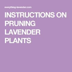 INSTRUCTIONS ON PRUNING LAVENDER PLANTS