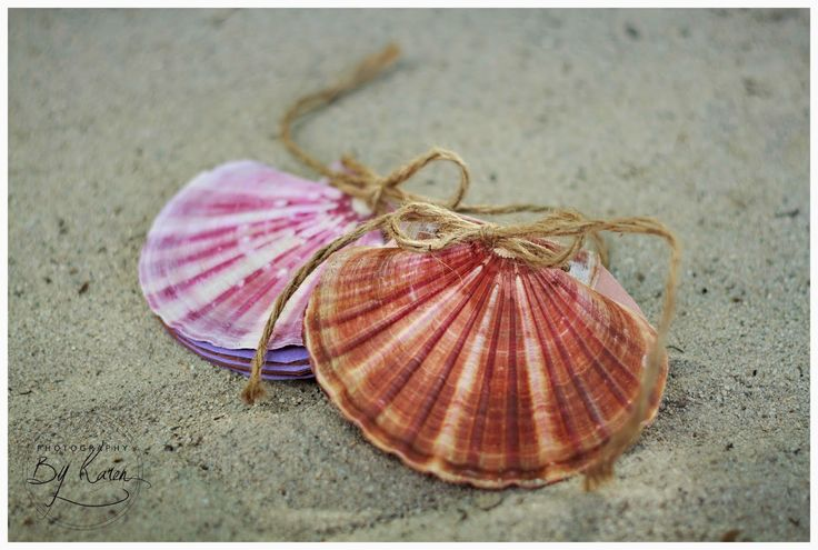 Don't be a salad: DIY SHELL NOTEBOOK