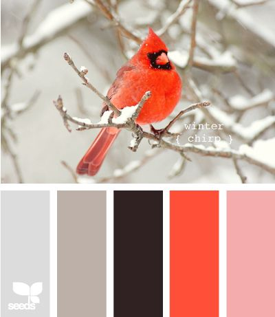 Like the contrast of the bright red colour. Design seeds Pinterest search (pinned Oct 2013)