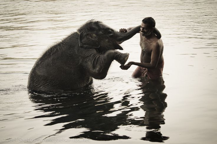 This is one of the most amazing and tender moments I've ever seen between a human and an elephant. The photo was taken during a morning bath, with lots of scrubbing with a coconut shell involved. Pure happiness. The elephant is an orphan juvenile and lives in Kerala, India.