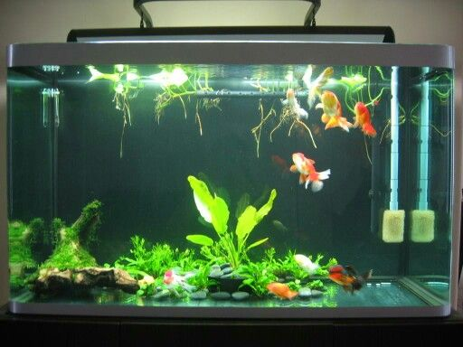 This is totally a solid gold tank looks like live plants for Fish tank for goldfish