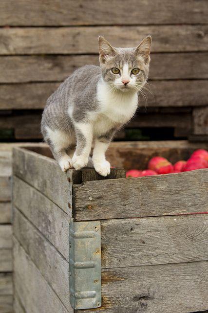 Square Nail Farm - guarding the produce | Flickr - Photo Sharing!