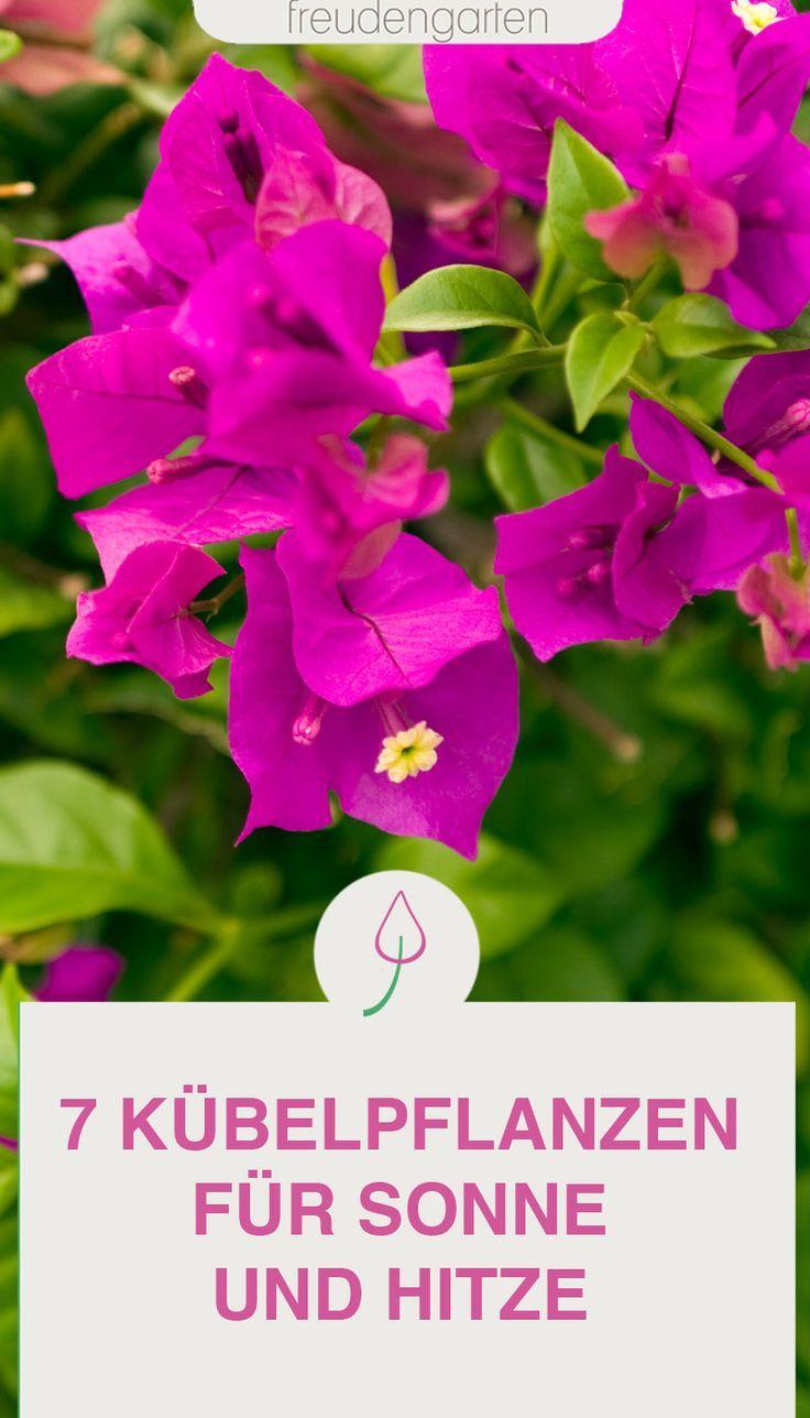 20 blühende Kübelpflanzen, die Sonne und Hitze aushalten   Pflanzen ...