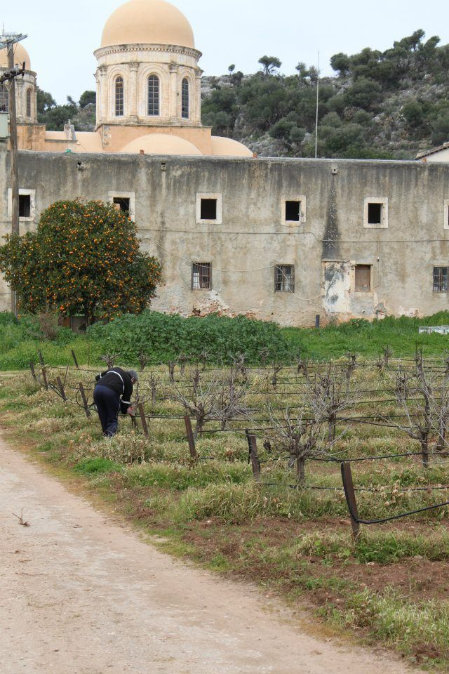 The sole grape pruner at the Agia Triada Monastery