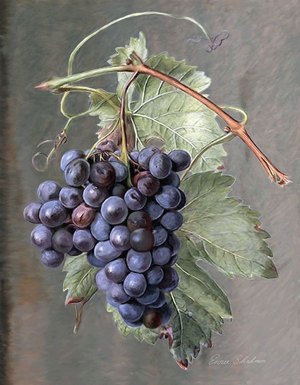 Grapes Painting - California Vineyard Art #Wine #California #Grapes