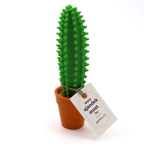 Kaktusz 2:1