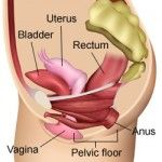 Hysterectomy: effects on pelvic floor and organ function