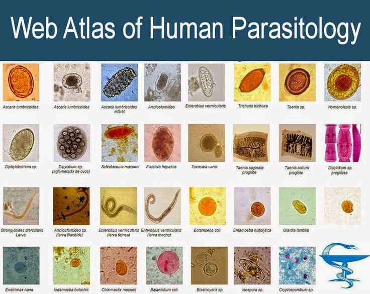 Web Atlas of Human Parasitology