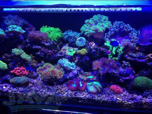 coral grade A dan grade B dapat dijadikan pilihan untuk mengisi aquarium air laut. #reeftank