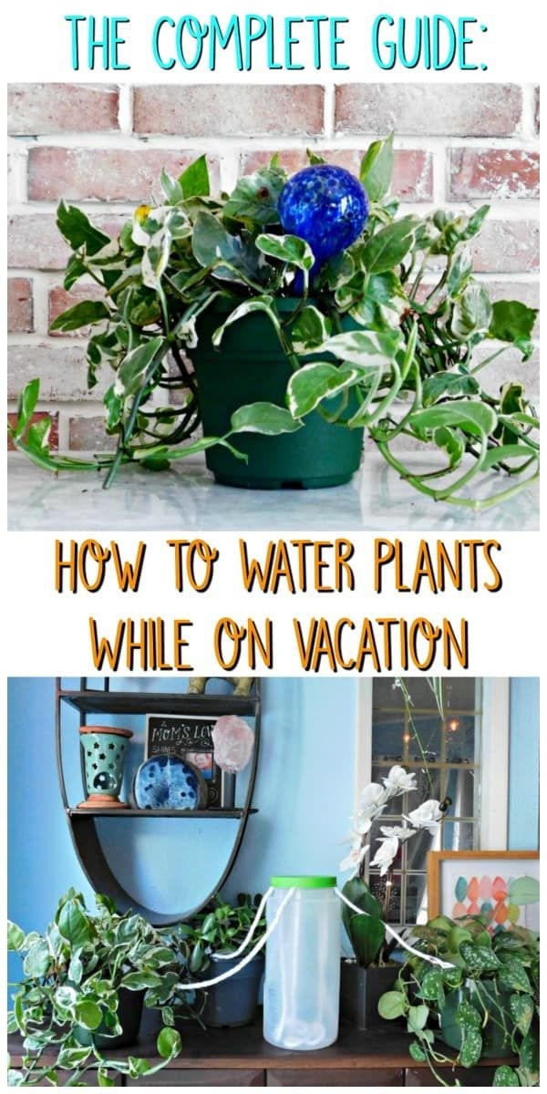 Keep Plants Watered While Away Easy Ways To Self Water House Houseplants Waterhouseplants Waterhouseplantswhileaway Keepplantsalive