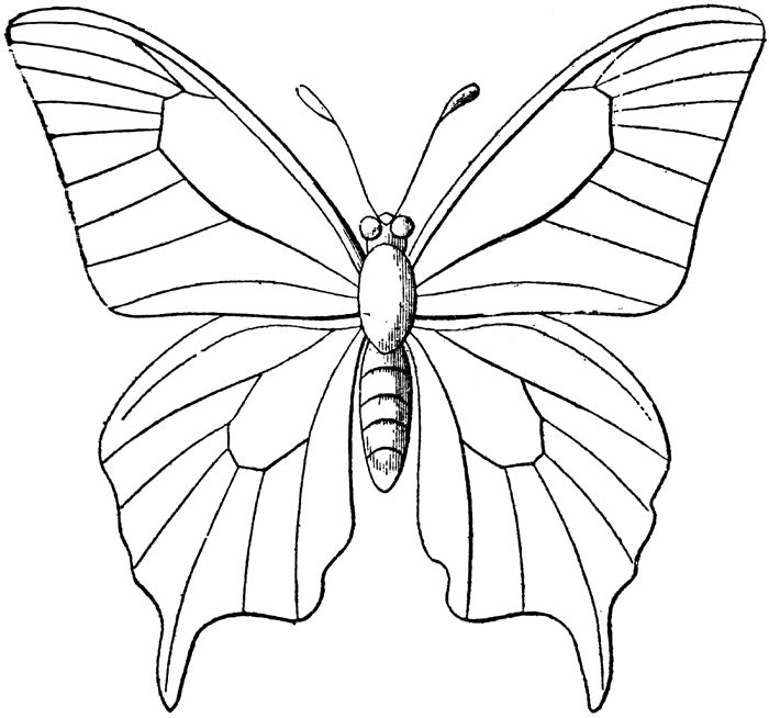 Butterfly Line Art Realistic Drawing Digital Stamps Free Coloring Pages