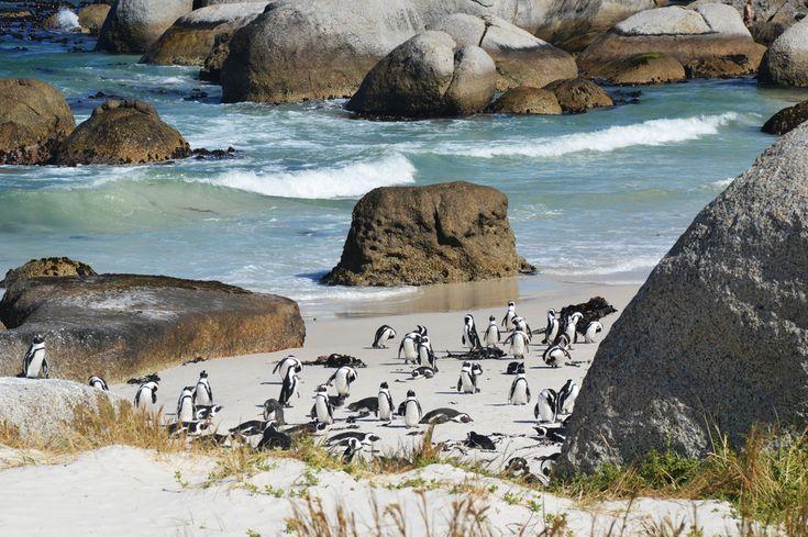 Um das sturmumtoste Kap an der Süd(west)spitze Afrikas spinnen sich viele Geschichten von verwegenen Entdecker, Monsterwellen und gekenterte Schiffe. Warum bloß heißt es dann Kap der Guten Hoffnung?