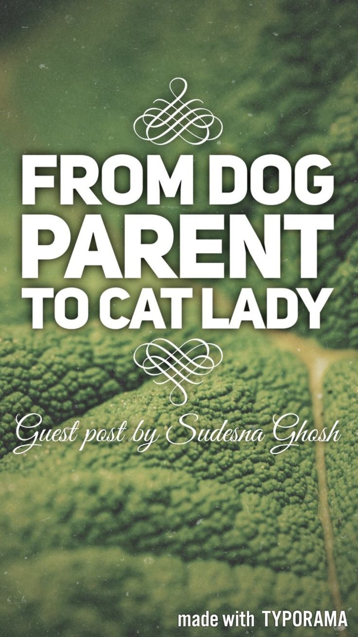 from dog parent to cat lady