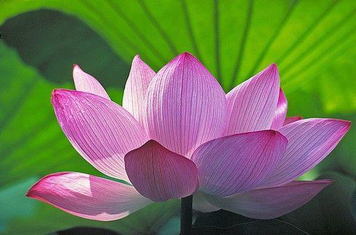 My yoga flower, the lotus!!