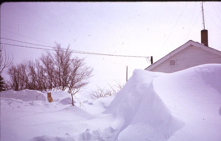 Blizzard, snow drift