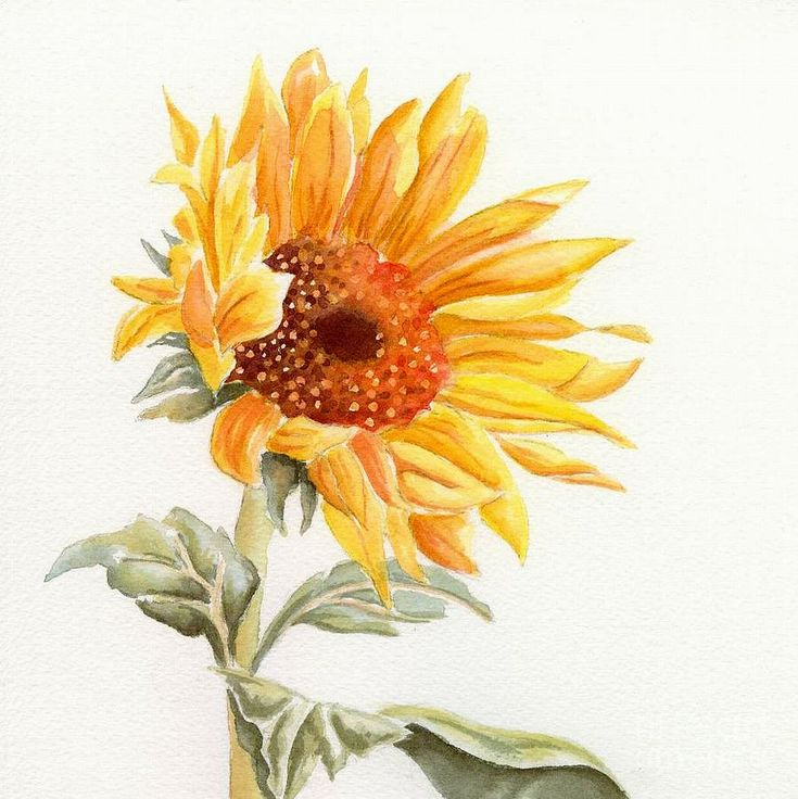 Sunflower Drawings | Sunflower Painting by Deborah ...